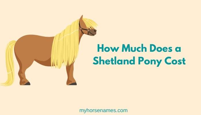 How Much Does a Shetland Pony Cost
