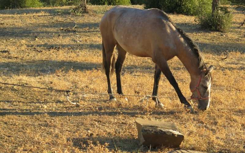 Strawberry Roan Horse names