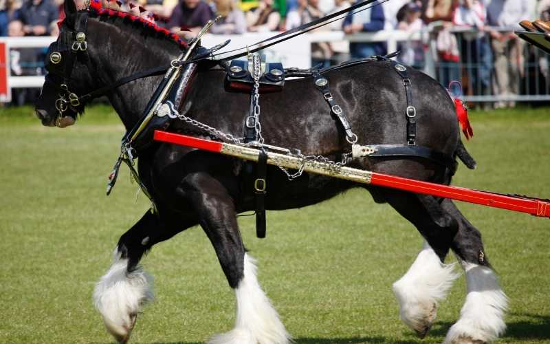 female shire horse names