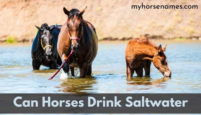 Can Horses Drink Salt water