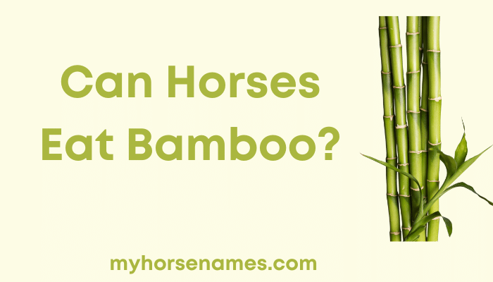 Can Horses Eat Bamboo