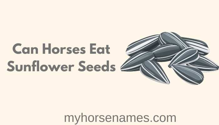 Can Horses Eat Sunflower Seeds