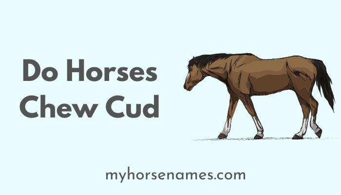 Do Horses Chew Cud