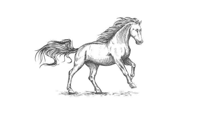 horses chew cud