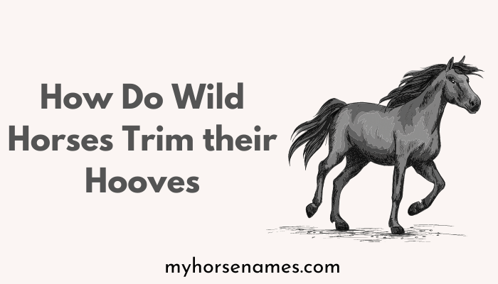How Do Wild Horses Trim their Hooves