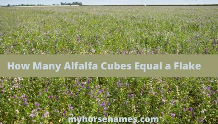 How Many Alfalfa Cubes Equal a Flake