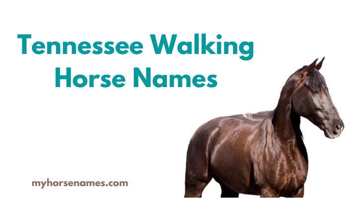 Tennessee Walking Horse Names