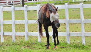 Cavallo Horse Boots Reviews