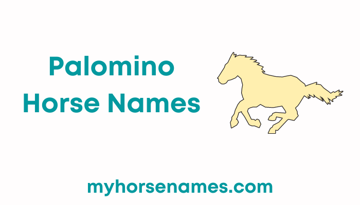 Palomino Horse Names