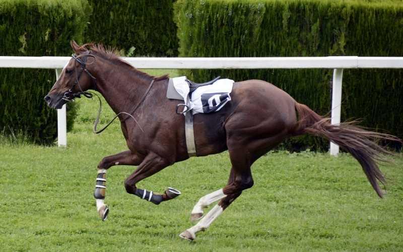 famous racehorse