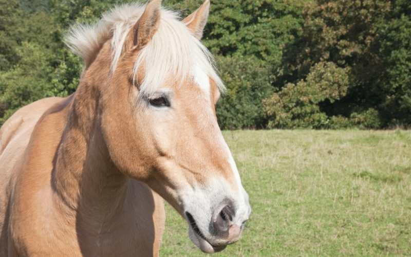 female Palomino Horse Names