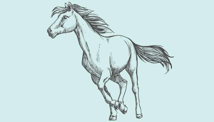 Flea Bitten Grey Horse