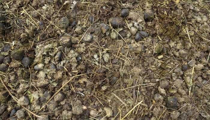 Is Horse Manure Good for Garden