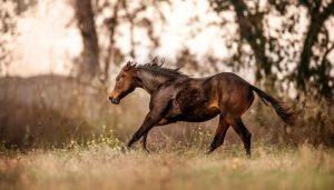 Quarter Horse Names