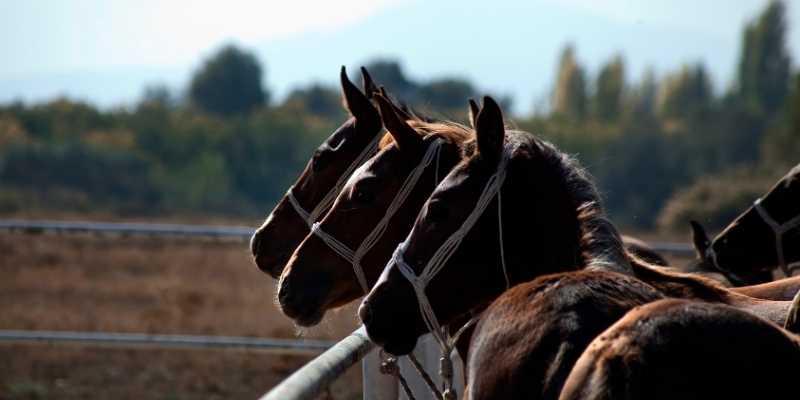 Racehorse price
