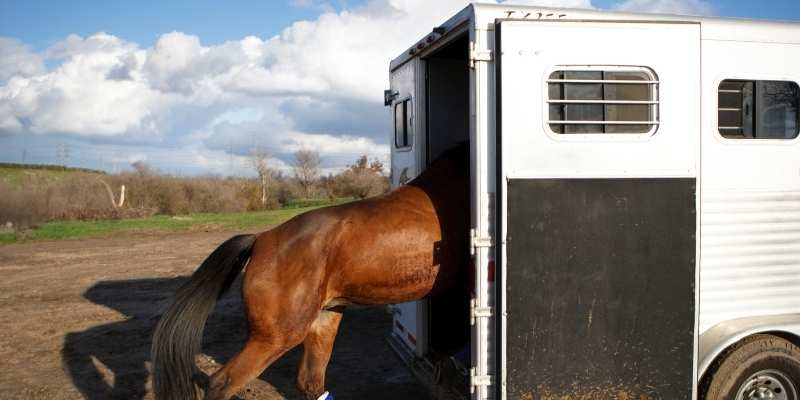 horse trailer body parts