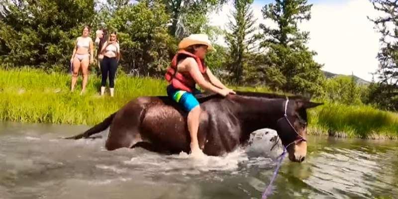 donkey swimming