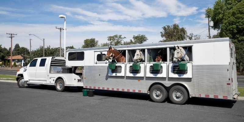 Lakota Horse Trailer Reviews