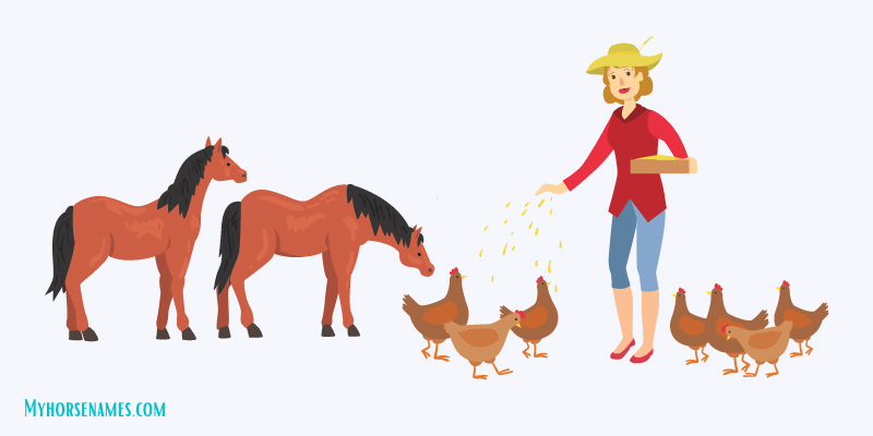 chicken-feed-for-horses