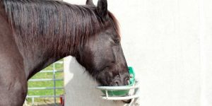 What Can Horses Drink