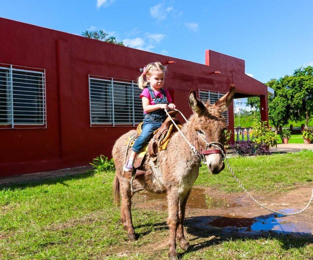 donkey riding tips