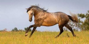 Andalusian Horse Cost