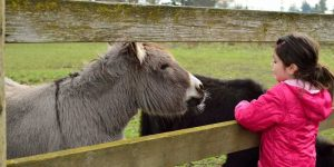 Donkey As Pet