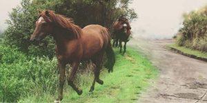 Horse Price in Pakistan
