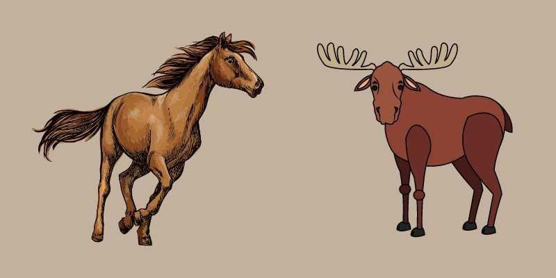 Moose vs Horse