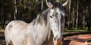 Silver Horse Names