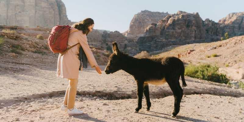 donkey-pet