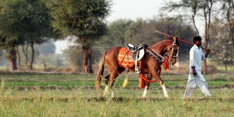 horse-cost-in-pakistan