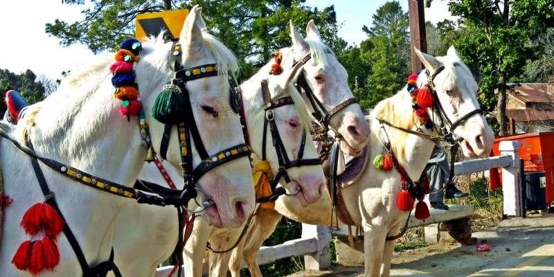 horse-in-pakistan