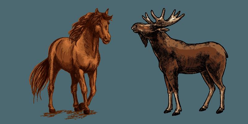 horse-vs-moose-comparison