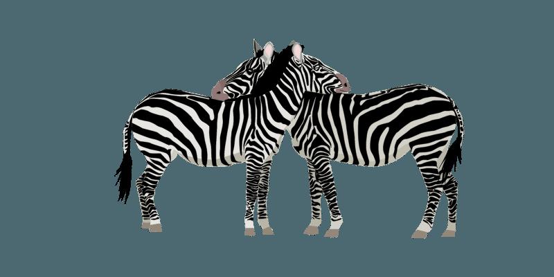 zebra-attack