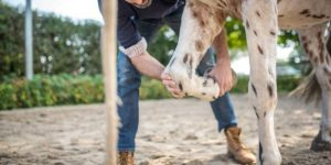 Best Horse Knee boots