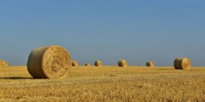 How Much Fertilizer Per Acre for Hay