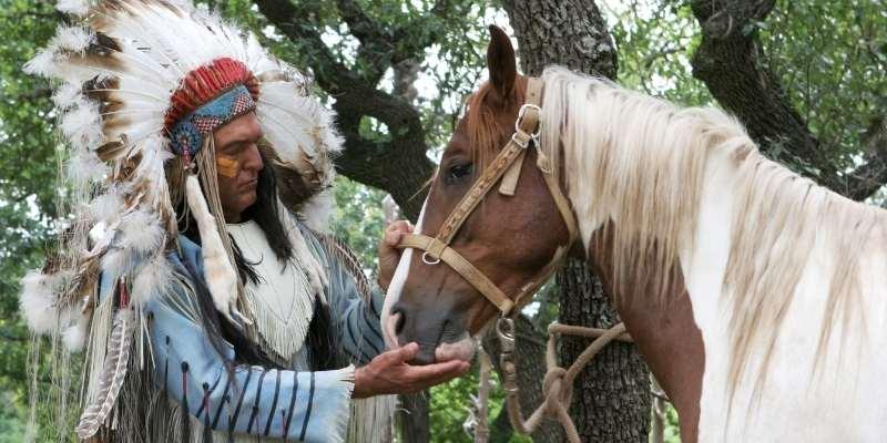 Spiti-Horse