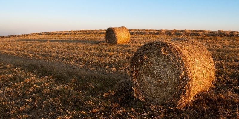 fertilizer-for-hay
