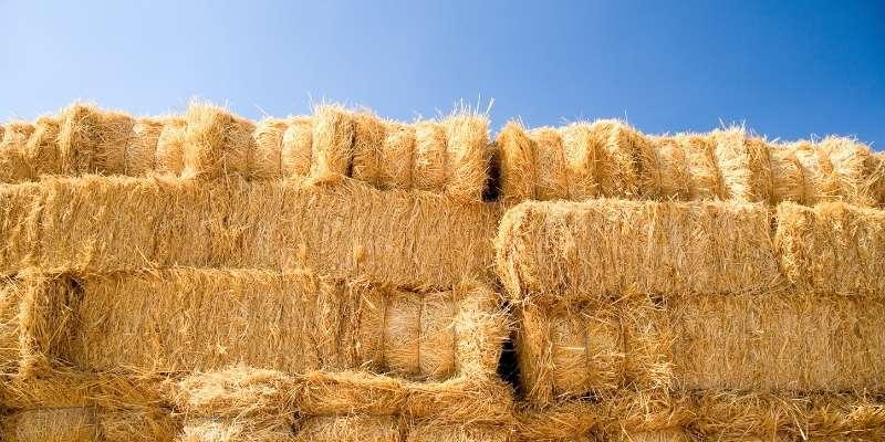 fixing-moldy-hay