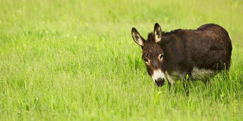 Are Donkeys Smart