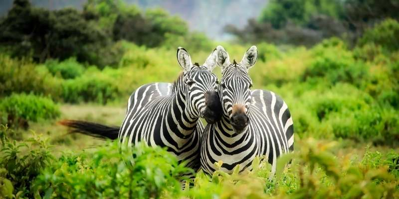 Can You Ride Zebras