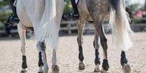 Horse Legs Fingers