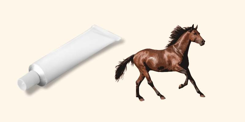 Previcox For Horses