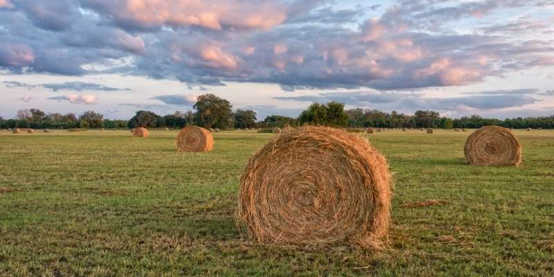 Round Bale of Hay Cost