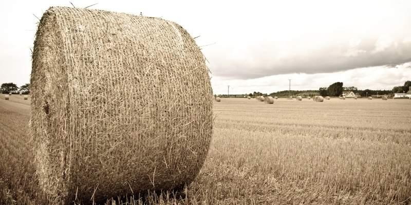 Round-Bale-of-Hay