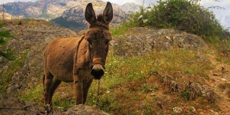 are-donkeys-dumb