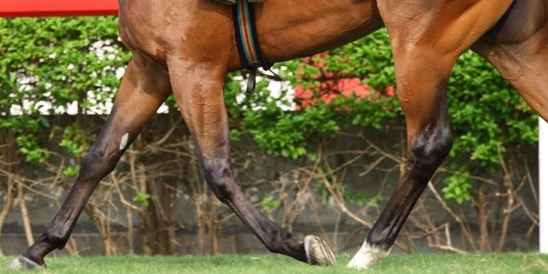 horse-legs