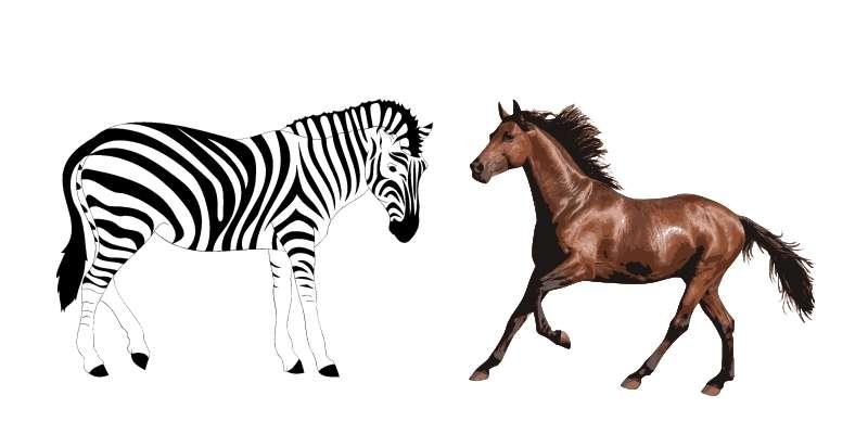 zebra-and-horse