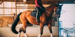 Best Long Riding Boots For Short Legs